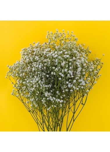 Çiçek Antalya Çiçek Antalya Cipso Çiçeği Canlı Cipsofilya Buket Gelincik Çiçeği 1Demet Yeşil